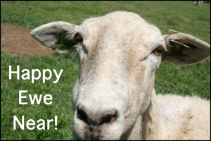 Happy Ewe Near